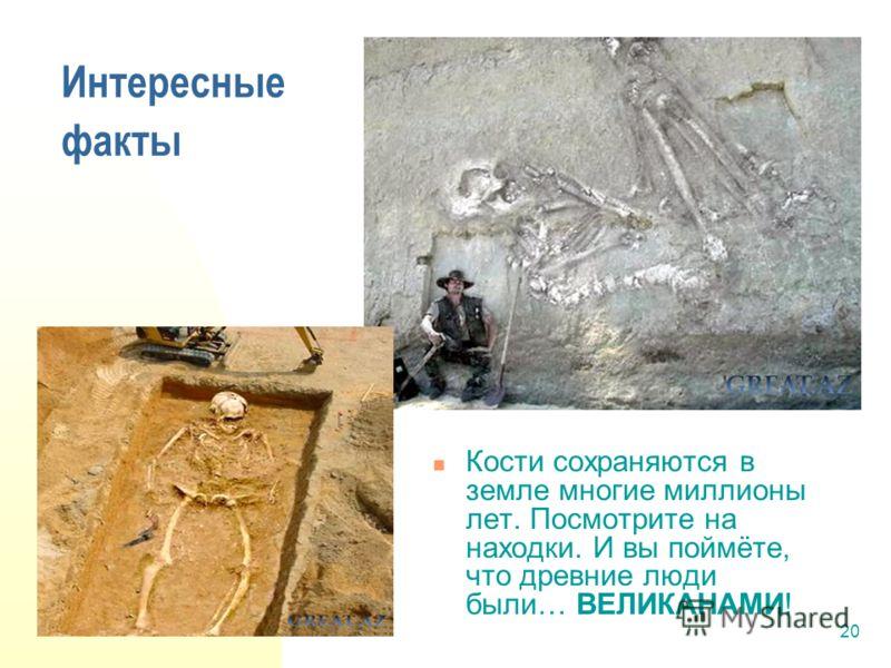 20 Интересные факты Кости сохраняются в земле многие миллионы лет. Посмотрите на находки. И вы поймёте, что древние люди были… ВЕЛИКАНАМИ!