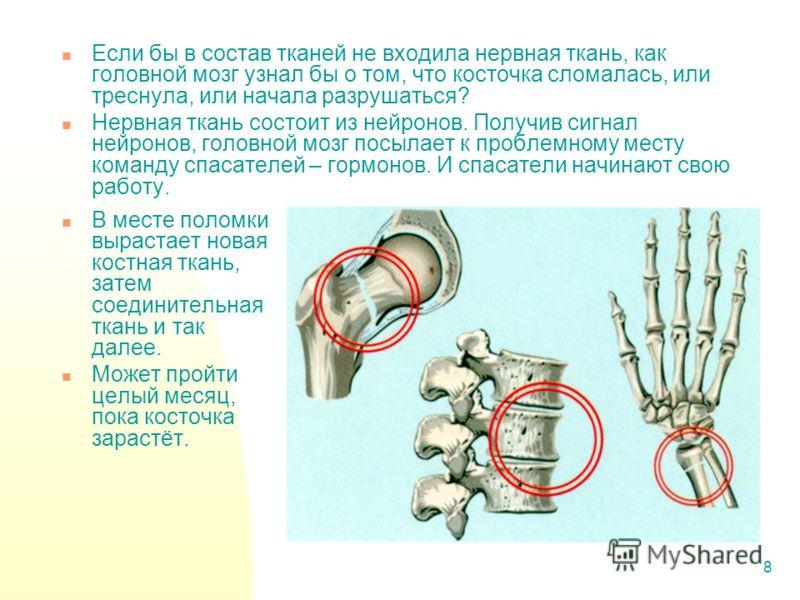 8 Если бы в состав тканей не входила нервная ткань, как головной мозг узнал бы о том, что косточка сломалась, или треснула, или начала разрушаться? Нервная ткань состоит из нейронов. Получив сигнал нейронов, головной мозг посылает к проблемному месту