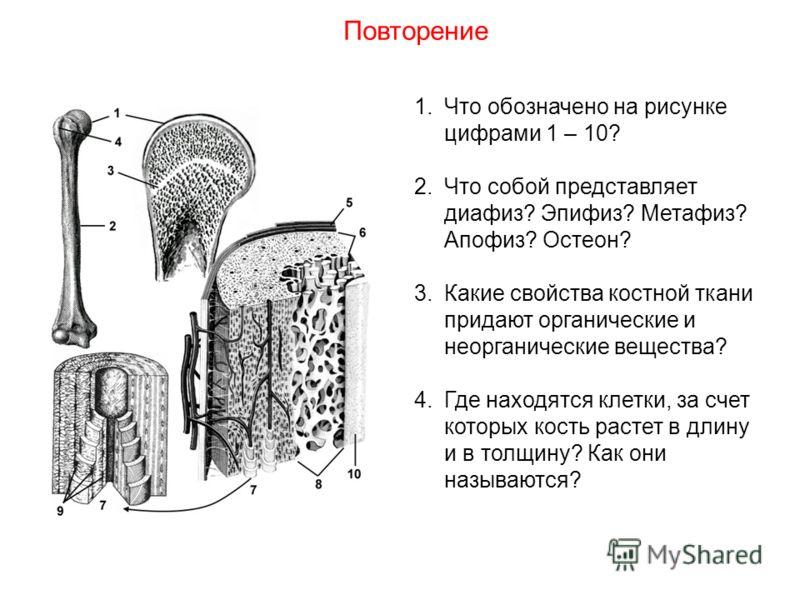 1.Что обозначено на рисунке цифрами 1 – 10? 2.Что собой представляет диафиз? Эпифиз? Метафиз? Апофиз? Остеон? 3.Какие свойства костной ткани придают органические и неорганические вещества? 4.Где находятся клетки, за счет которых кость растет в длину