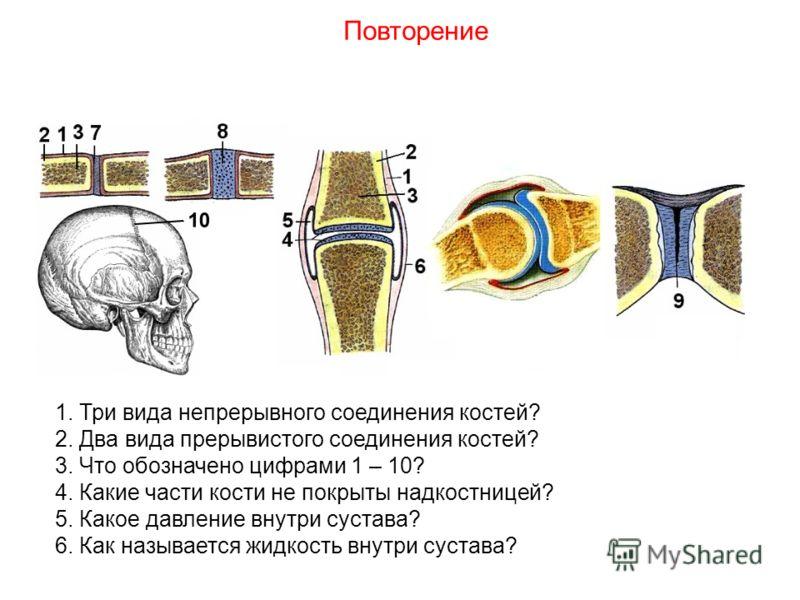 1. Три вида непрерывного соединения костей? 2. Два вида прерывистого соединения костей? 3. Что обозначено цифрами 1 – 10? 4. Какие части кости не покрыты надкостницей? 5. Какое давление внутри сустава? 6. Как называется жидкость внутри сустава? Повто