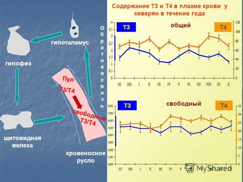 Содержание Т3 и Т4 в плазме крови у северян в течение года ОбратнаясвязьОбратнаясвязь гипоталамус гипофиз щитовидная железа кровеносное русло Пул Т3/Т4 свободные Т3/Т4 общий Т3Т4 свободный Т4Т3