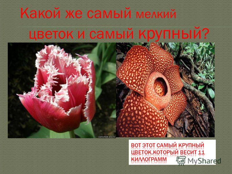 Какой же самый мелкий цветок и самый крупный ?