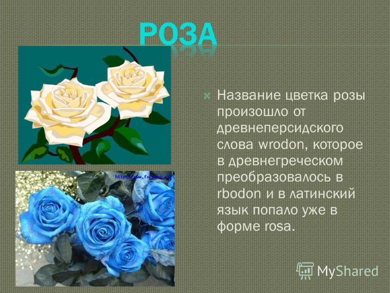 Название цветка розы произошло от древнеперсидского слова wrodon, которое в древнегреческом преобразовалось в rbodon и в латинский язык попало уже в форме rosa.