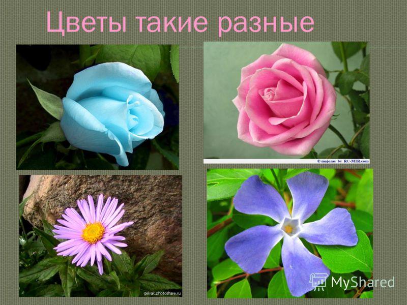Цветы такие разные