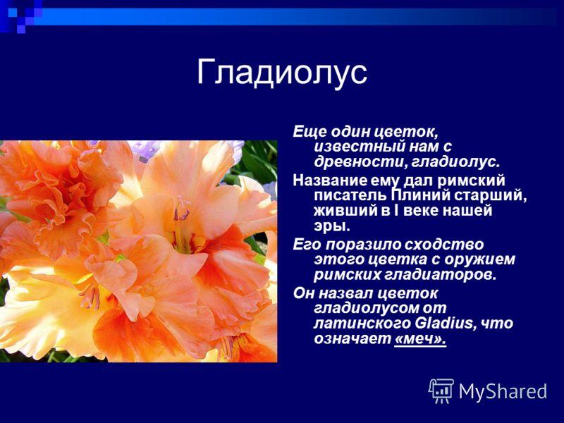 Гладиолус Еще один цветок, известный нам с древности, гладиолус. Название ему дал римский писатель Плиний старший, живший в I веке нашей эры. Его поразило сходство этого цветка с оружием римских гладиаторов. Он назвал цветок гладиолусом от латинского