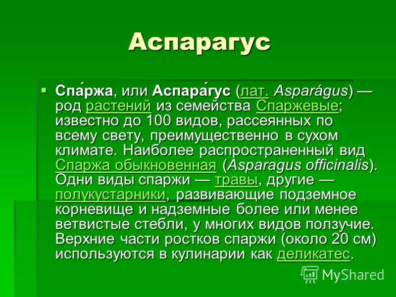 Аспарагус Аспарагус Спа́ржа, или Аспара́гус (лат. Asparágus) род растений из семейства Спаржевые; известно до 100 видов, рассеянных по всему свету, преимущественно в сухом климате. Наиболее распространенный вид Спаржа обыкновенная (Asparagus officina