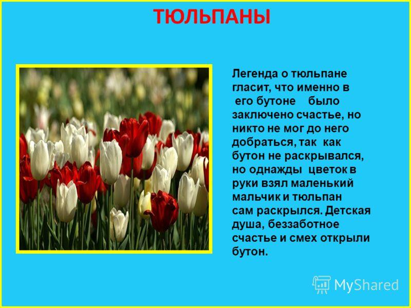 ТЮЛЬПАНЫ Легенда о тюльпане гласит, что именно в его бутоне было заключено счастье, но никто не мог до него добраться, так как бутон не раскрывался, но однажды цветок в руки взял маленький мальчик и тюльпан сам раскрылся. Детская душа, беззаботное сч