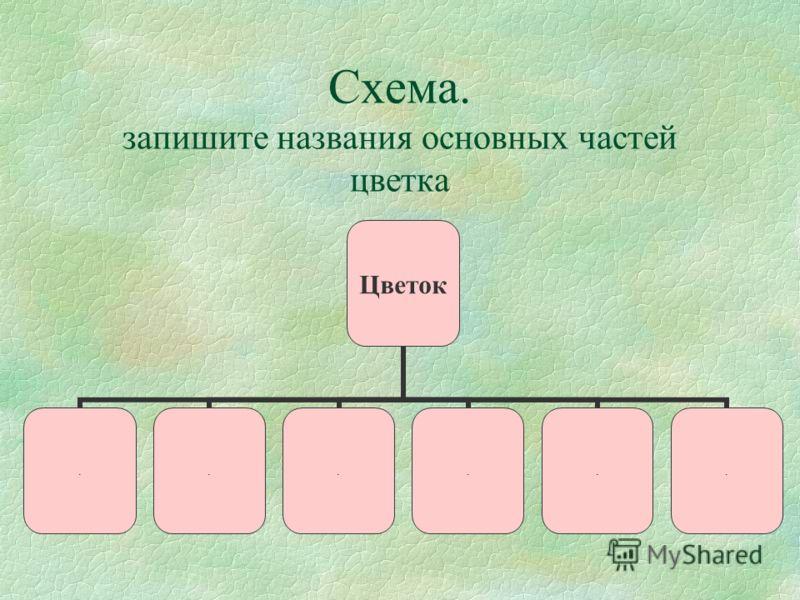 Схема. запишите названия основных частей цветка Цветок......