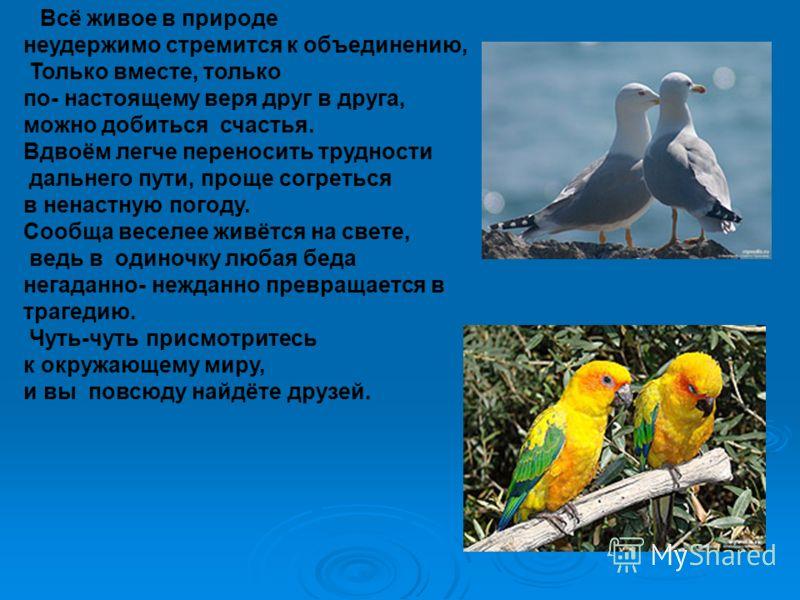 Всё живое в природе неудержимо стремится к объединению, Только вместе, только по- настоящему веря друг в друга, можно добиться счастья. Вдвоём легче переносить трудности дальнего пути, проще согреться в ненастную погоду. Сообща веселее живётся на све