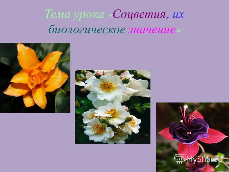 1 Тема урока « Соцветия, их биологическое значение »