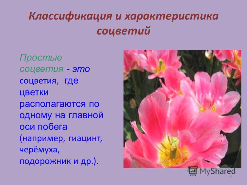 9 Классификация и характеристика соцветий Простые соцветия - это соцветия, где цветки располагаются по одному на главной оси побега (например, гиацинт, черёмуха, подорожник и др.).