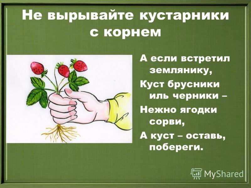 Не вырывайте кустарники с корнем А если встретил землянику, Куст брусники иль черники – Нежно ягодки сорви, А куст – оставь, побереги.