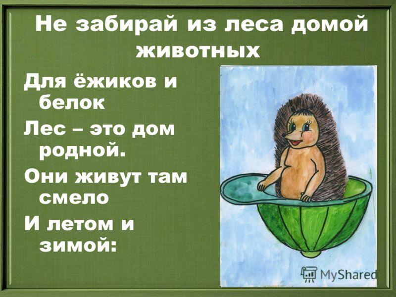 Не забирай из леса домой животных Для ёжиков и белок Лес – это дом родной. Они живут там смело И летом и зимой: