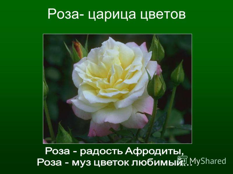 Роза- царица цветов
