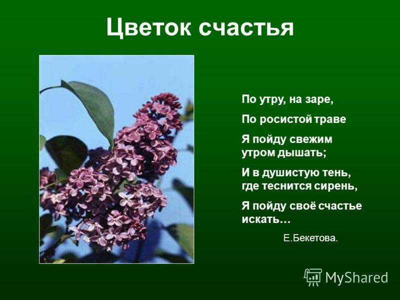 Цветок счастья По утру, на заре, По росистой траве Я пойду свежим утром дышать; И в душистую тень, где теснится сирень, Я пойду своё счастье искать… Е.Бекетова.