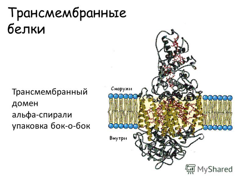 Трансмембранные белки Трансмембранный домен альфа-спирали упаковка бок-о-бок