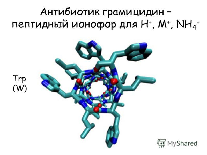 Антибиотик грамицидин – пептидный ионофор для H +, M +, NH 4 + Trp (W)