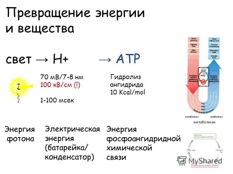 Превращение энергии и вещества свет Н+ ATP 70 мВ/7-8 нм 100 кВ/см (!) 1-100 мсек Энергия фосфоангидридной химической связи Энергия фотона Электрическая энергия (батарейка/ конденсатор) Гидролиз ангидрида 10 Kcal/mol