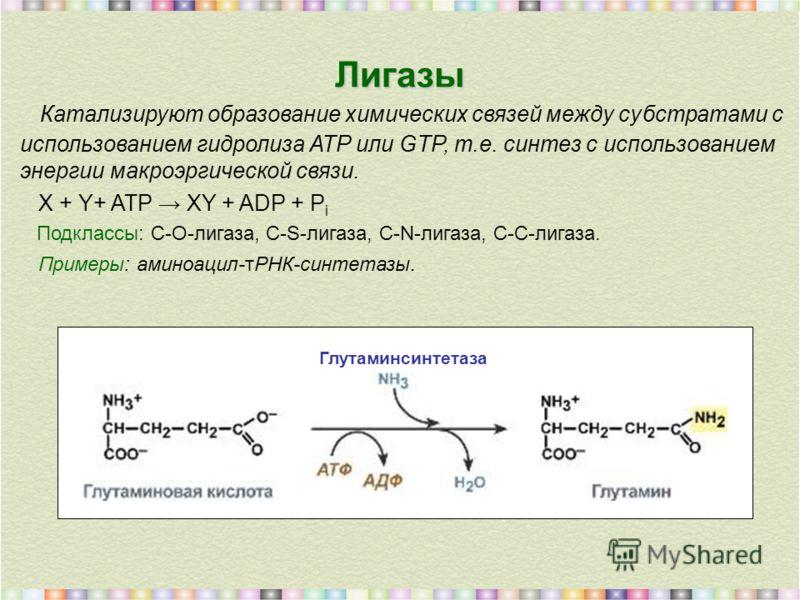 Лигазы Катализируют образование химических связей между субстратами с использованием гидролиза АТР или GTP, т.е. синтез с использованием энергии макроэргической связи. X + Y+ ATP XY + ADP + P i Подклассы: C-O-лигаза, C-S-лигаза, C-N-лигаза, C-C-лигаз