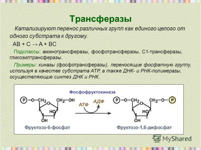Трансферазы Катализируют перенос различных групп как единого целого от одного субстрата к другому. AB + C A + BC Подклассы: аминотрансферазы, фосфотрансферазы, C1-трансферазы, гликозилтрансферазы. Примеры: киназы (фосфотрансферазы), переносящие фосфа