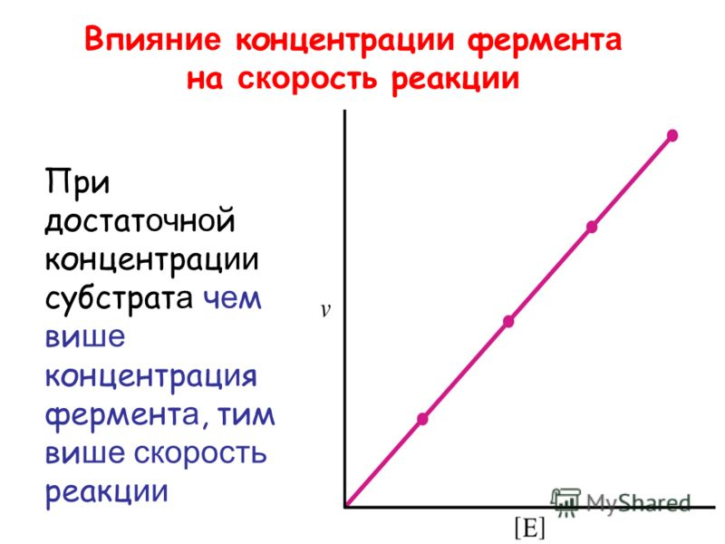 Впи яние концентрац ии фермент а на скоро сть реакц ии При достат оч н о й концентрац ии субстрат а ч е м ви ше концентрац и я фермент а, тим ви ше скорость реакц ии