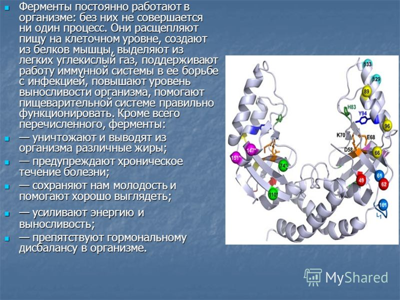 Ферменты постоянно работают в организме: без них не совершается ни один процесс. Они расщепляют пищу на клеточном уровне, создают из белков мышцы, выделяют из легких углекислый газ, поддерживают работу иммунной системы в ее борьбе с инфекцией, повыша