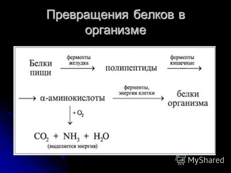 Двигательная функция сократительные белки вызывают всякое движение. сократительные белки вызывают всякое движение.