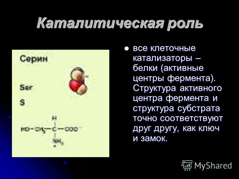 Транспортная функция белков белок крови гемоглобин присоединяет кислород и разносит его по всем тканям. белок крови гемоглобин присоединяет кислород и разносит его по всем тканям.