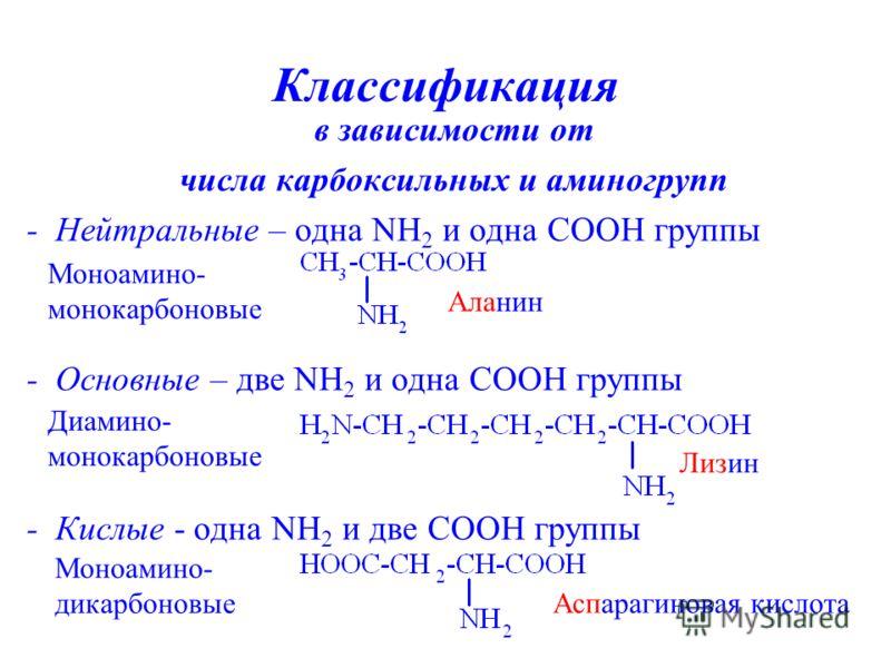 Классификация в зависимости от числа карбоксильных и аминогрупп - Нейтральные – одна NH 2 и одна СООН группы - Основные – две NH 2 и одна СООН группы - Кислые - одна NH 2 и две СООН группы Аспарагиновая кислота Лизин Аланин Моноамино- монокарбоновые