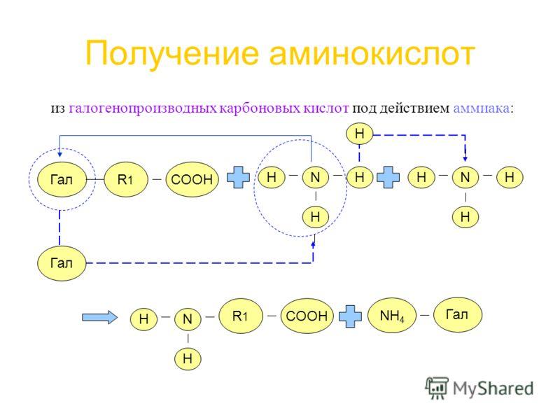 Получение аминокислот из галогенопроизводных карбоновых кислот под действием аммиака: R1R1 Гал COOH HN H HHNH H Гал H R1R1 COOH HN H NH 4