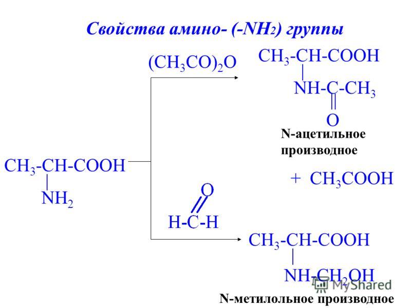 CH 3 -CH-COOH NH 2 (CH 3 СO) 2 O CH 3 -CH-COOH NH-CH 2 OH N-метилольное производное + CH 3 COOH CH 3 -CH-COOH NH-C-CH 3 O N-ацетильное производное Свойства амино- (-NH 2 ) группы
