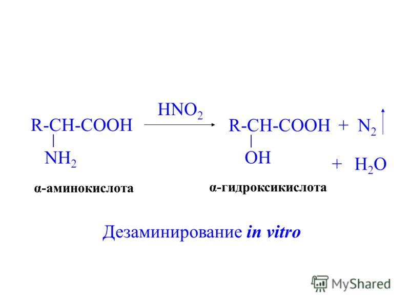 R-CH-COOH NH 2 HNO 2 R-CH-COOH OH +N2N2 +H2OH2O α-аминокислота α-гидроксикислота Дезаминирование in vitro