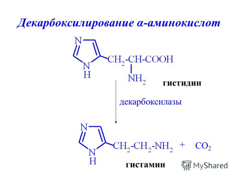 Декарбоксилирование α-аминокислот гистидин гистамин + CO 2 декарбоксилазы
