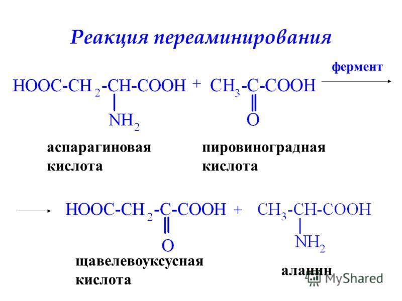 Реакция переаминирования аспарагиновая кислота + фермент + пировиноградная кислота щавелевоуксусная кислота аланин