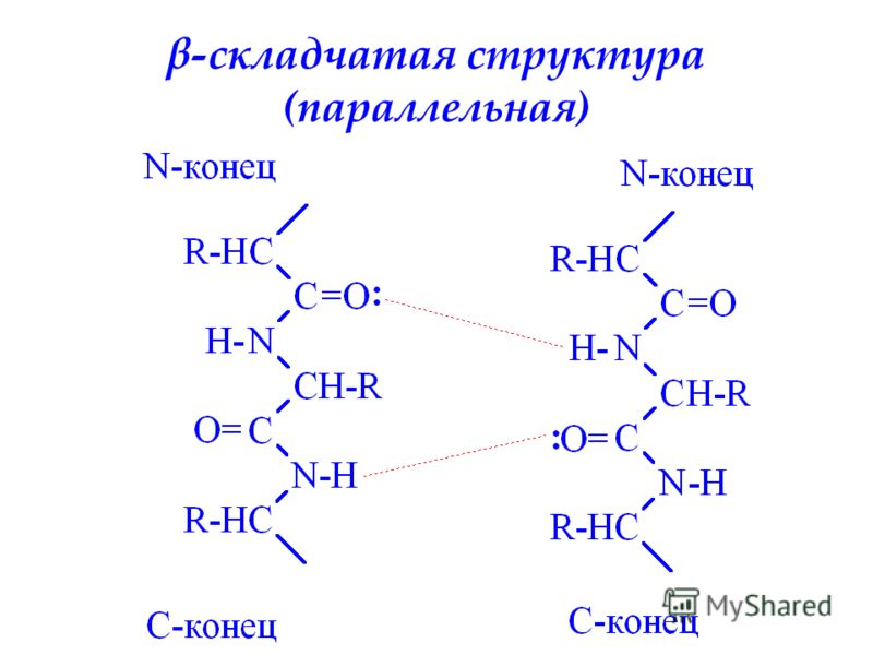 β-складчатая структура (параллельная)