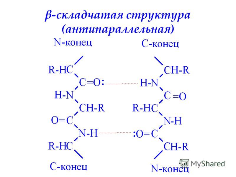 β-складчатая структура (антипараллельная)