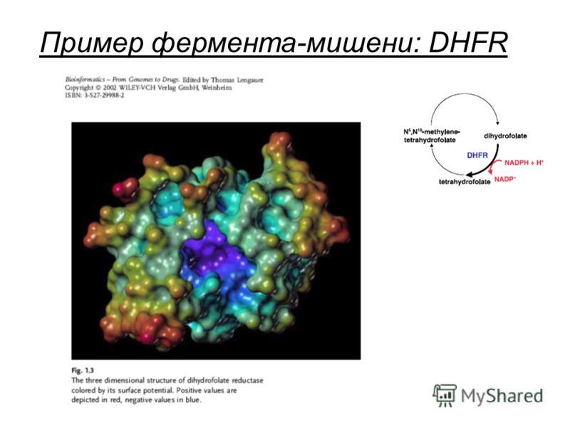 Пример фермента-мишени: DHFR