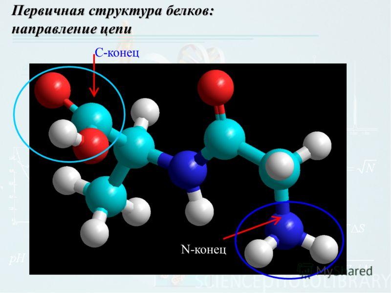 Первичная структура белков: направление цепи N-конец С-конец