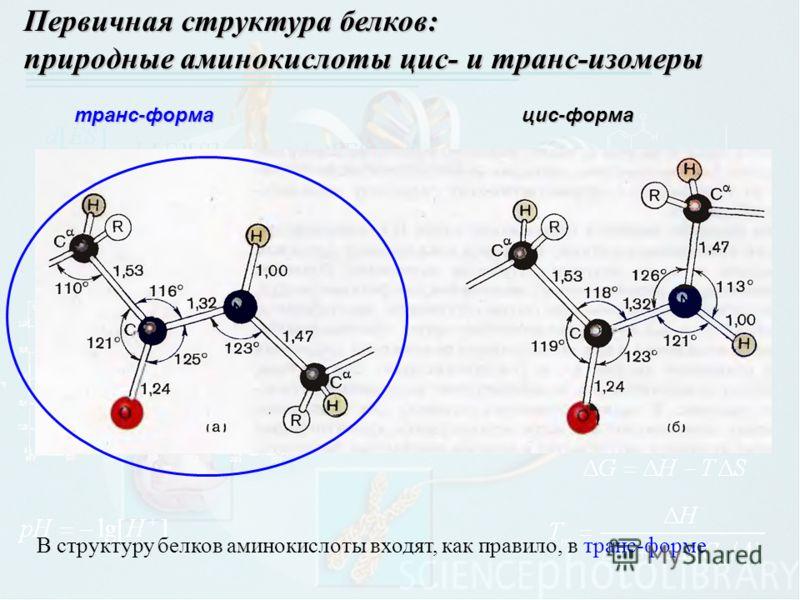Первичная структура белков: природные аминокислоты цис- и транс-изомеры транс-форма В структуру белков аминокислоты входят, как правило, в транс-форме цис-форма
