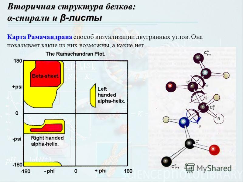 Вторичная структура белков: α-спирали и β-листы Карта Рамачандрана Карта Рамачандрана способ визуализации двугранных углов. Она показывает какие из них возможны, а какие нет.