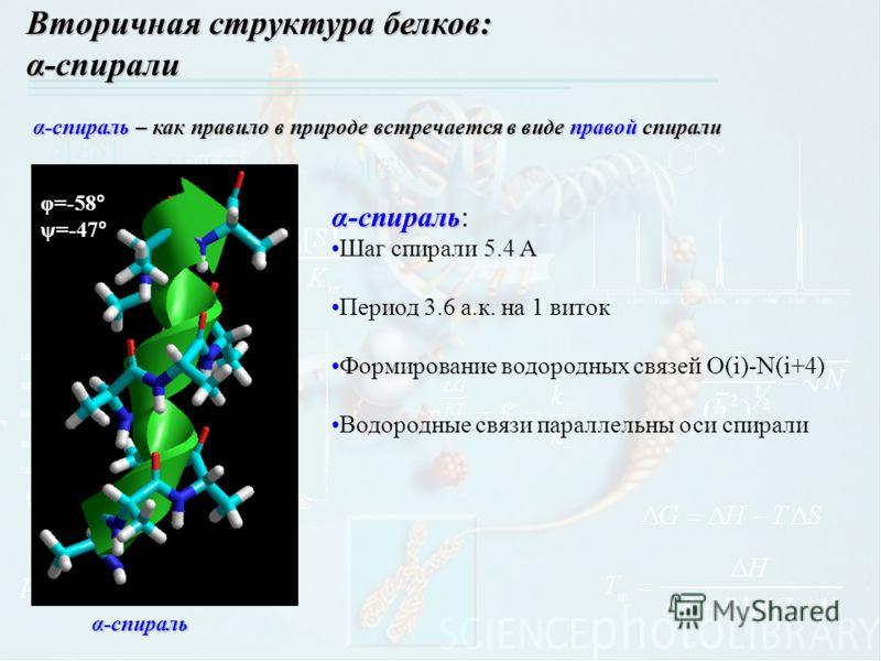 Вторичная структура белков: α-спирали α-спираль φ=-58 ° ψ=-47 ° α-спираль – как правило в природе встречается в виде правой спирали α-спираль α-спираль: Шаг спирали 5.4 A Период 3.6 а.к. на 1 виток Формирование водородных связей O(i)-N(i+4) Водородны
