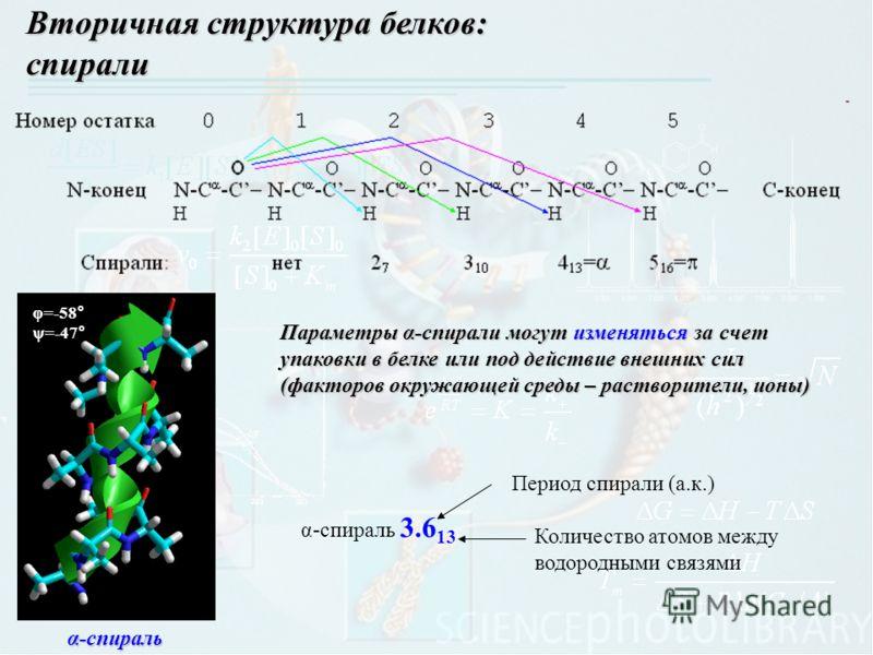 Вторичная структура белков: спирали α-спираль φ=-58 ° ψ=-47 ° Параметры α-спирали могут изменяться за счет упаковки в белке или под действие внешних сил (факторов окружающей среды – растворители, ионы) α-спираль 3.6 13 Период спирали (а.к.) Количеств