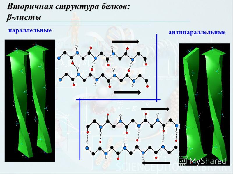 Вторичная структура белков: β-листы параллельные антипараллельные