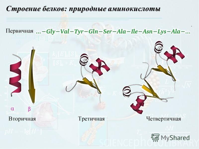 Строение белков: природные аминокислоты