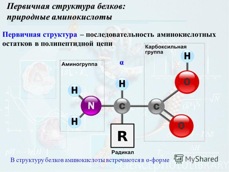 α В структуру белков аминокислоты встречаются в α-форме Первичная структура белков: природные аминокислоты Первичная структура – последовательность аминокислотных остатков в полипептидной цепи