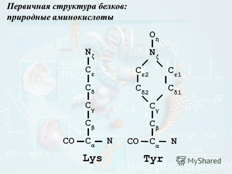 Первичная структура белков: природные аминокислоты