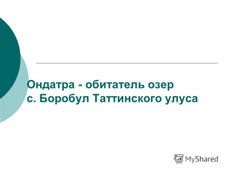Ондатра - обитатель озер с. Боробул Таттинского улуса