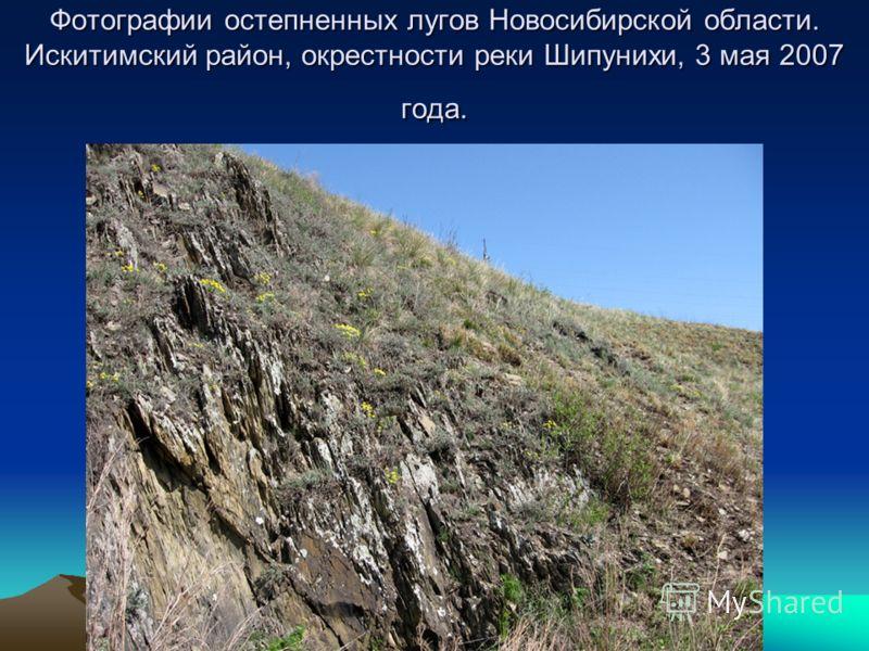 Фотографии остепненных лугов Новосибирской области. Искитимский район, окрестности реки Шипунихи, 3 мая 2007 года.