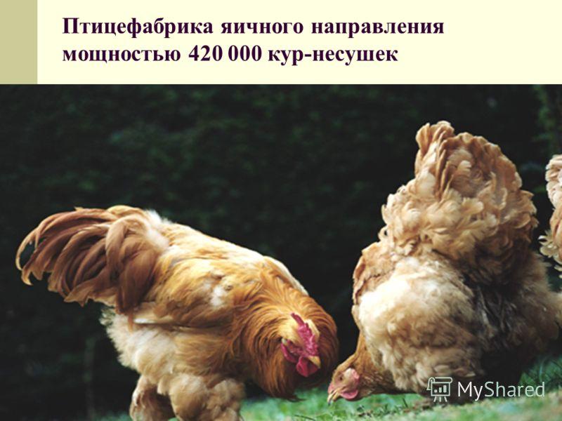 Птицефабрика яичного направления мощностью 420 000 кур-несушек