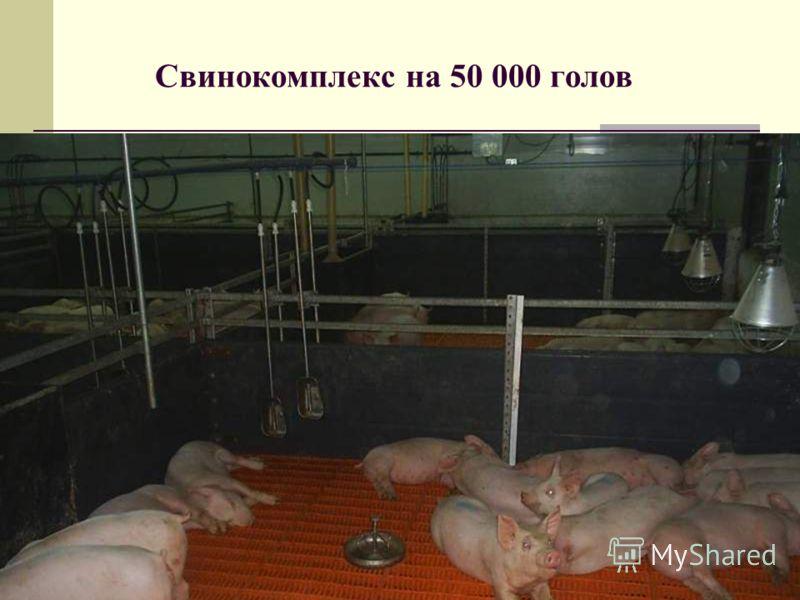 Свинокомплекс на 50 000 голов